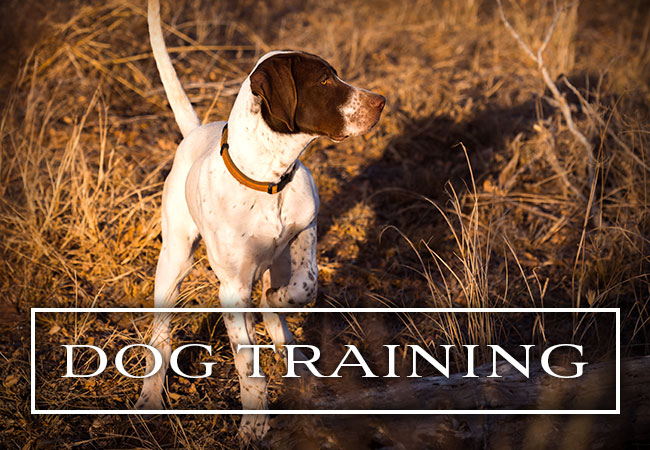 Ronnie Smith Kennels Bird Dog Training