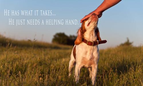 Training Your Bird Dog