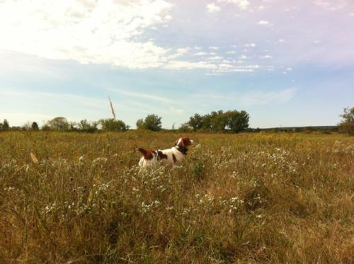 Fall for Bird Dog Trainers