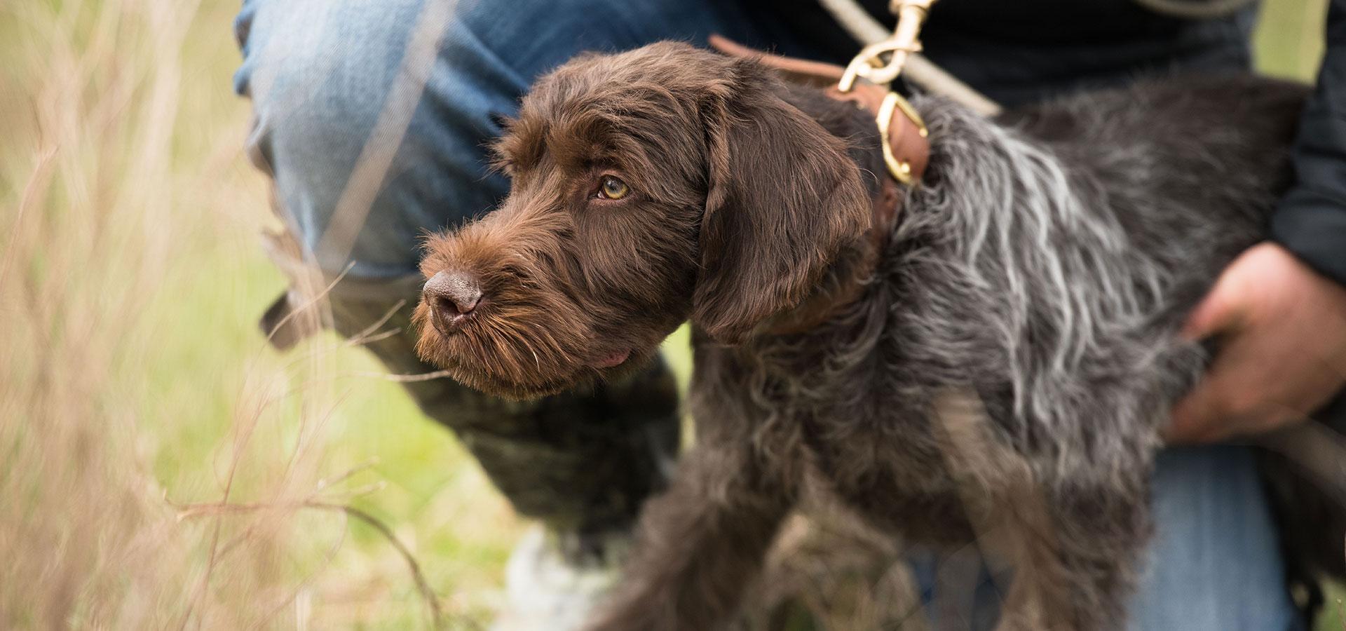 Bird Dog Training, Training Seminars, and Supplies - Ronnie Smith