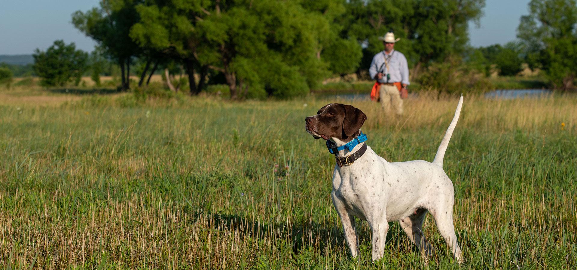 Bird Dog Training, Training Seminars, and Supplies - Ronnie